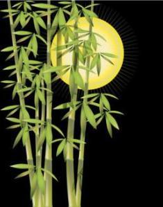 Çin Bambu ağacı